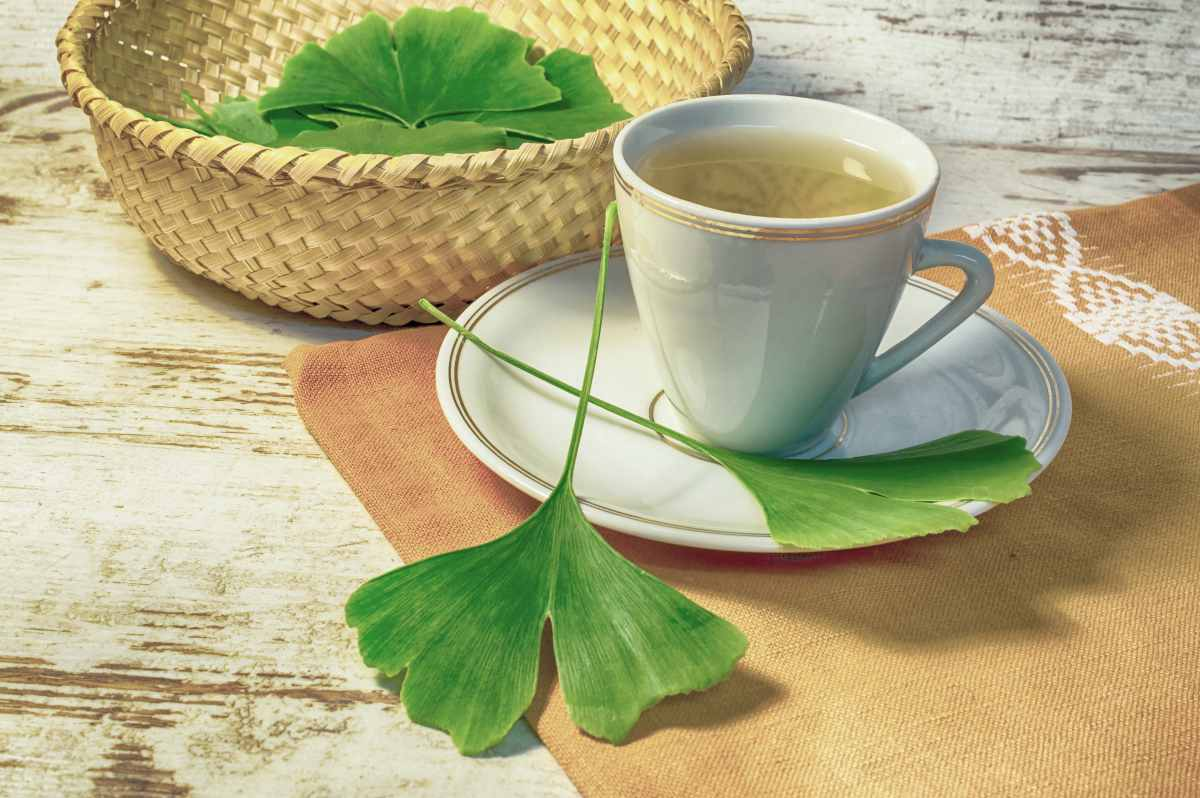 ginkgo biloba tea | BRAIN TEA: Teas To Drink That Boost Brain Health | brain tea | tea for concentration