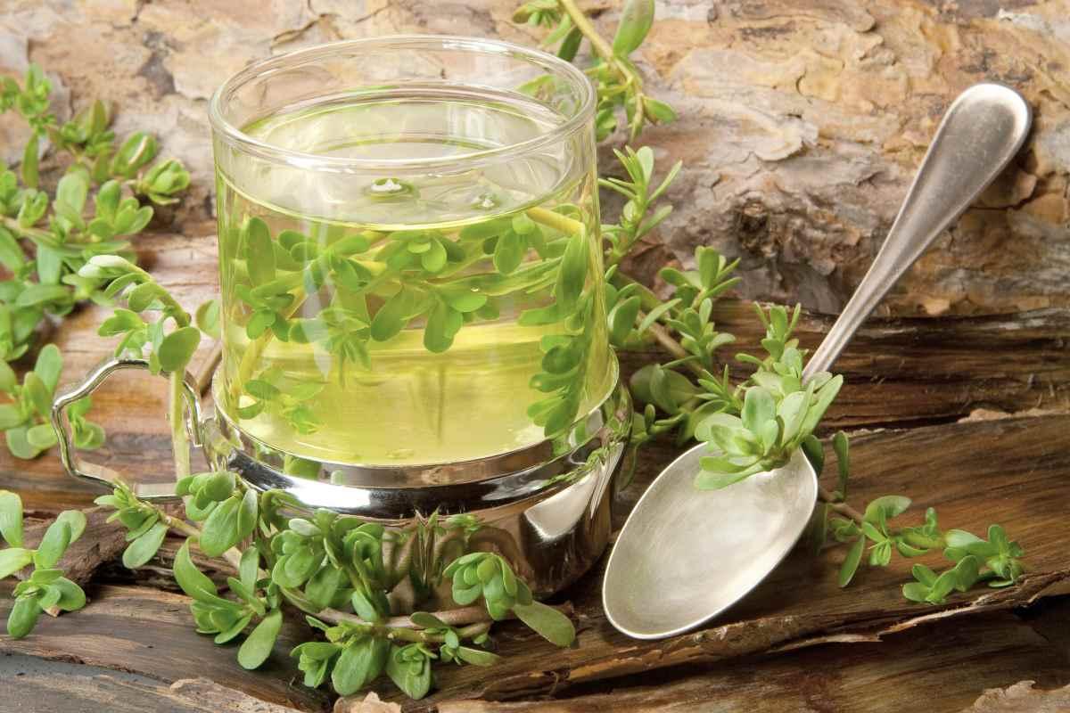 brahmi leaf tea and spoon | BRAIN TEA: Teas To Drink That Boost Brain Health | brain tea | brain herb