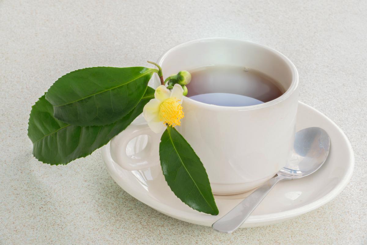 camellia sinensis tea | BRAIN TEA: Teas To Drink That Boost Brain Health | brain tea | herbs to improve memory
